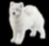 samoyed_400x378 (1).png