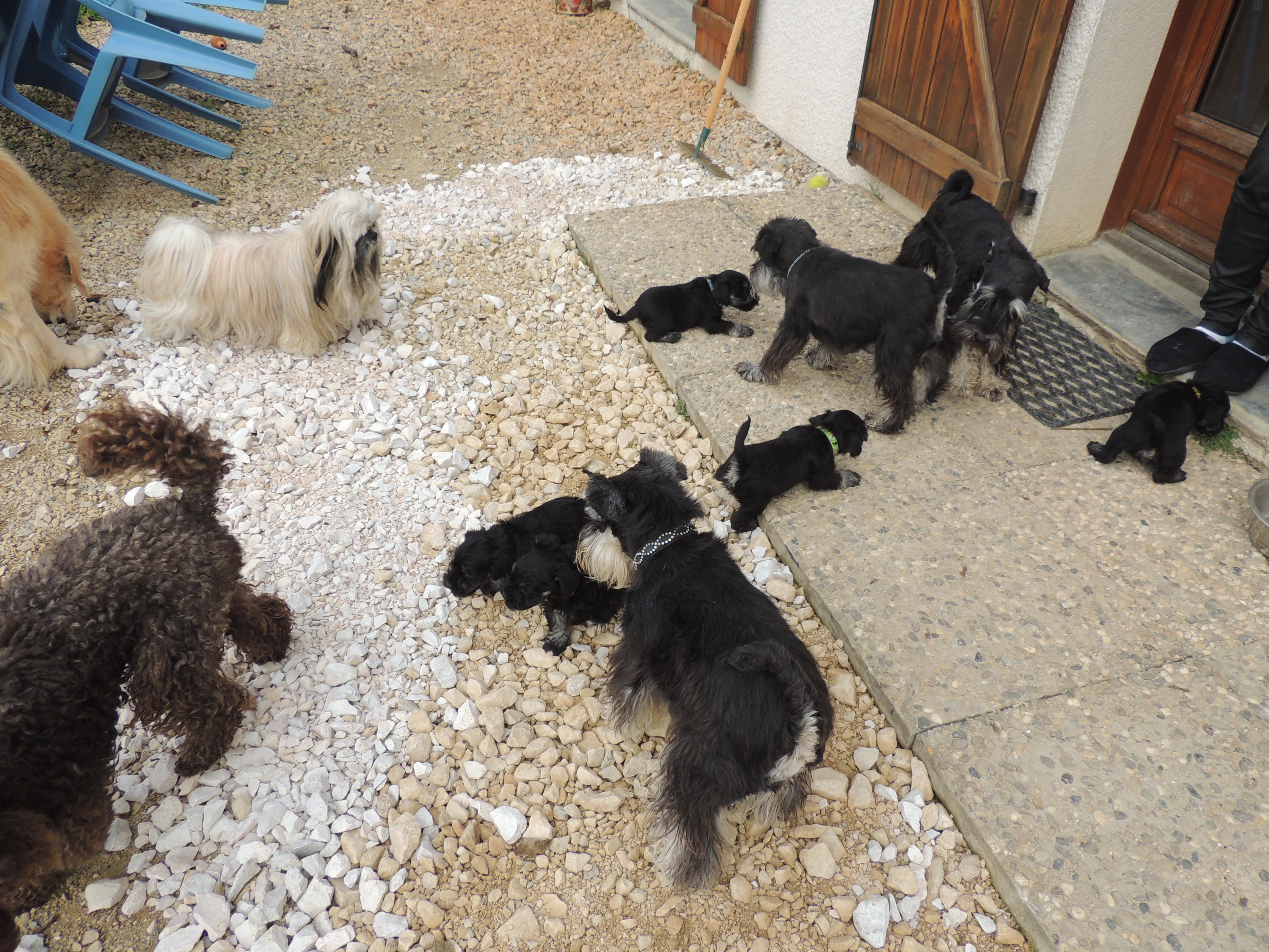 rencontre avec d'autres chiens