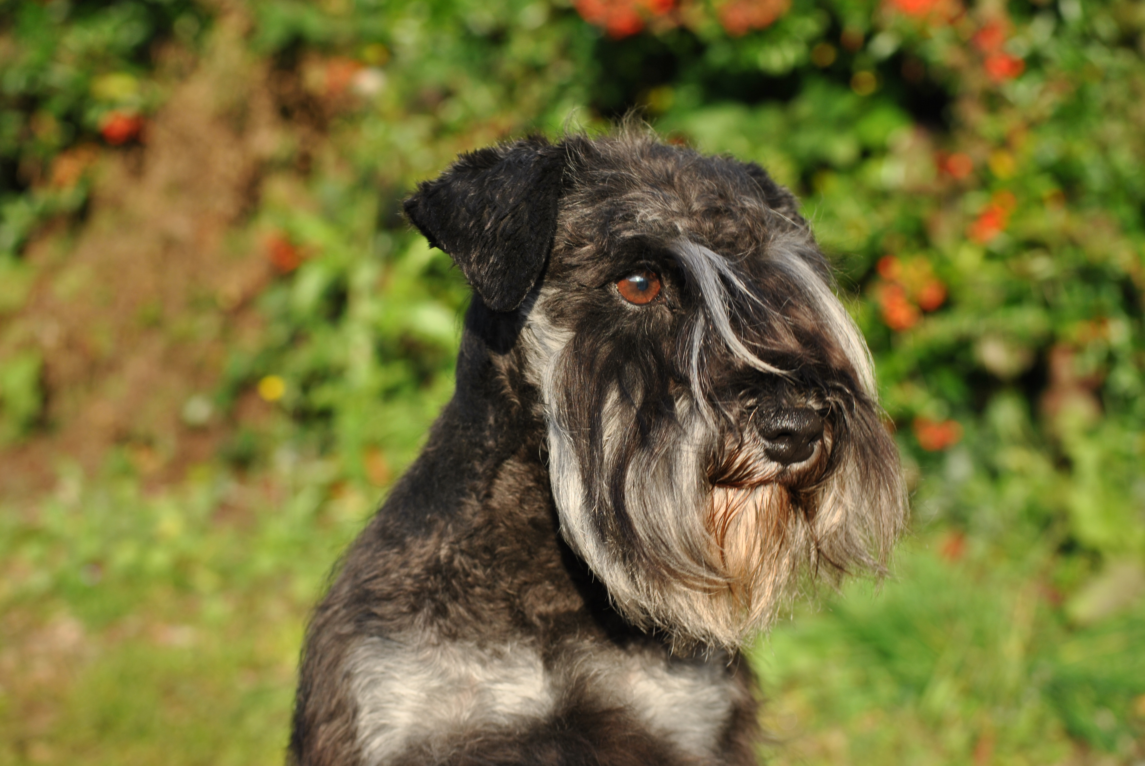 Photos chiens 235