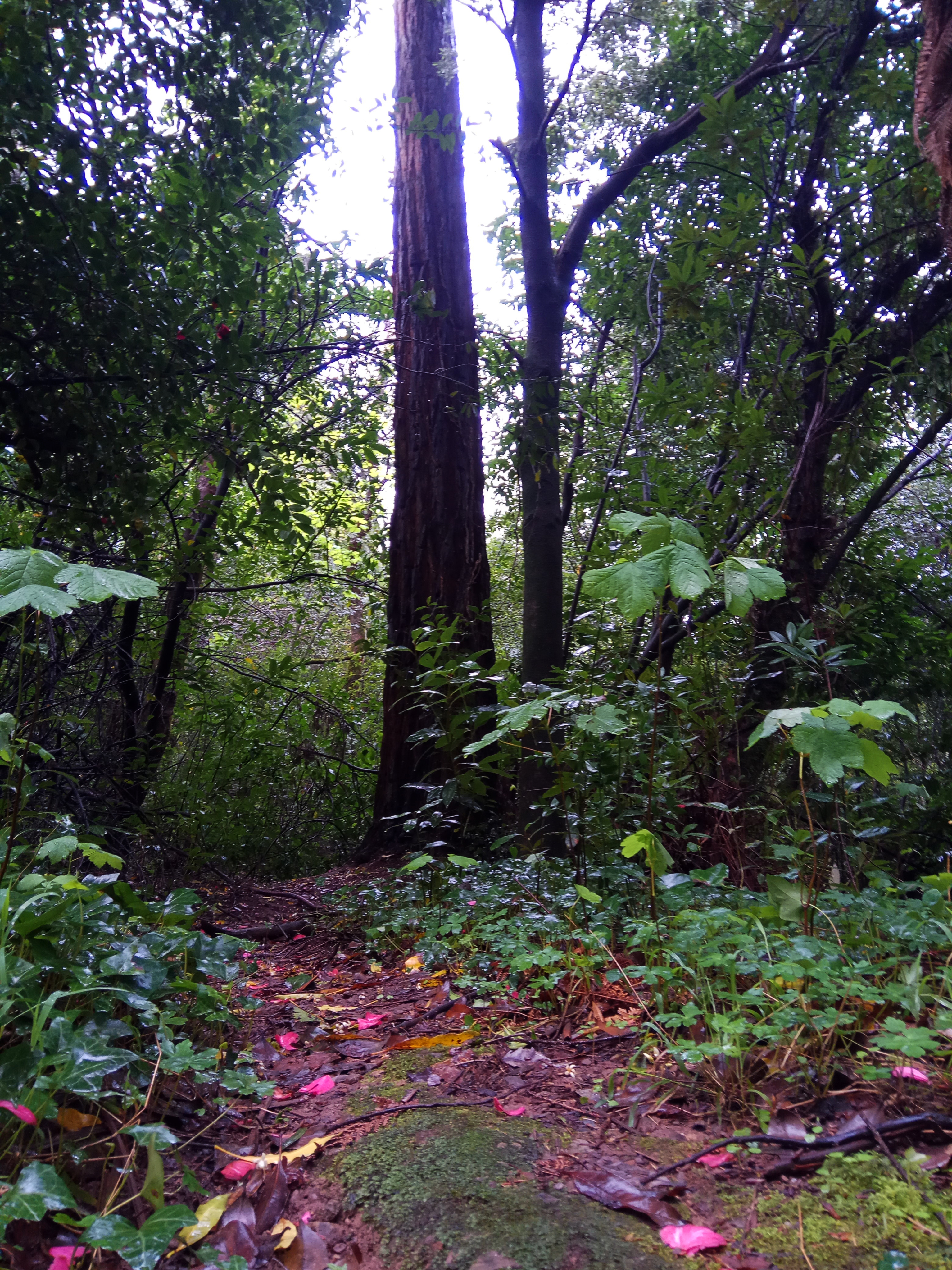 Floresta 7.jpg