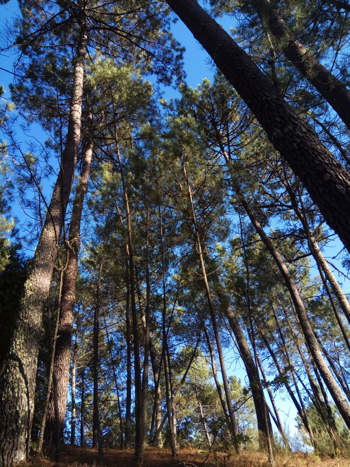 Floresta 2.jpg