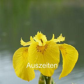 Wasserlilie.jpg