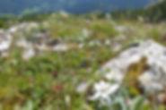 Nachhaltigkeit-Almwiese.jpg