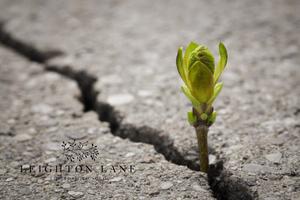 seed blooming through street crack