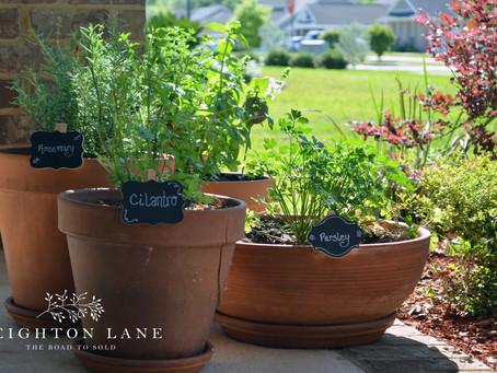 Quick Budget-Friendly Garden Markers
