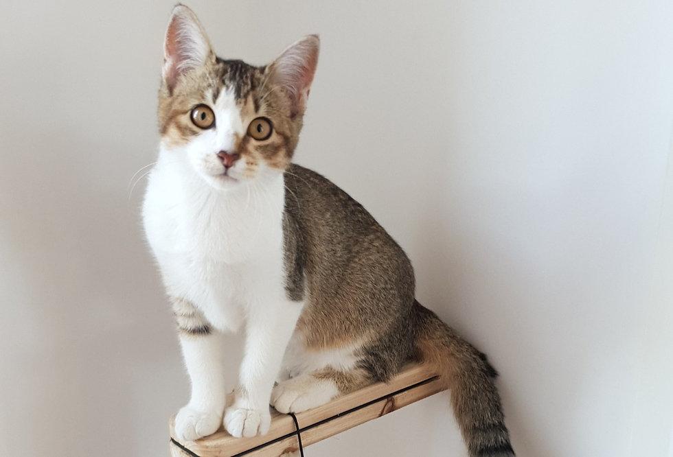 Pensionnaire chatte Rockette