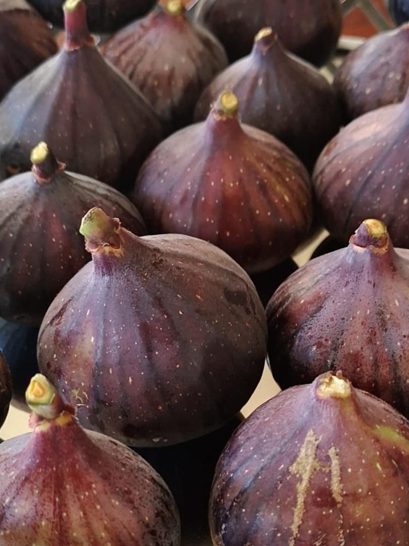 figs1.jpg