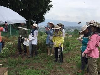養蜂体験会