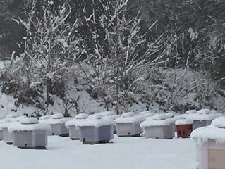 雪の中の巣箱たち