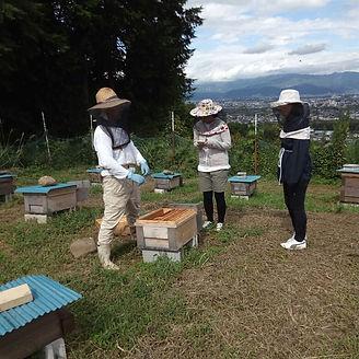 いやし養蜂.jpg