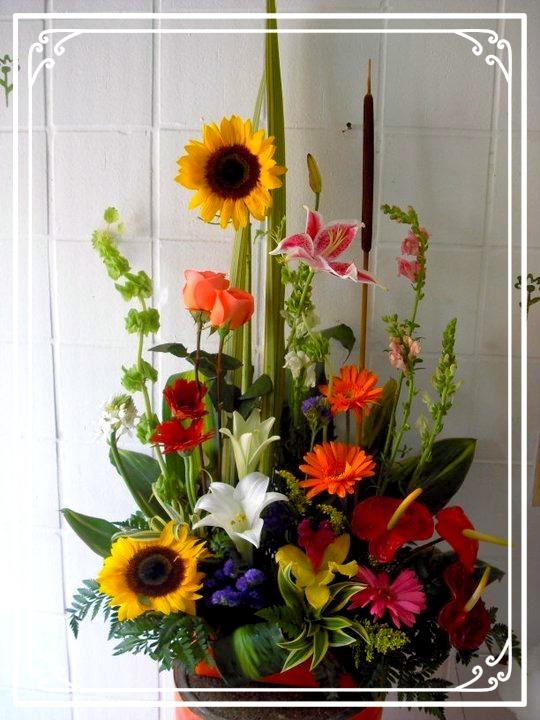 Floristerias Y Flores En Armenia Colombia