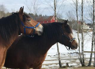 Ny hest i Aktiv Stall