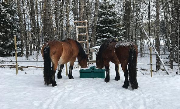 Aktivstall, naturlig hesthold, hest, drikekar
