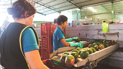 Empacadoras Fruit Breeze