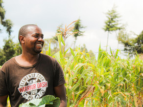 Impact 2020: 1.4 million vegetable portions, what a milestone!