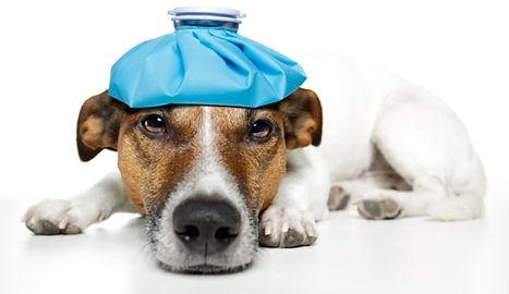 dog-headache-628x363.jpg
