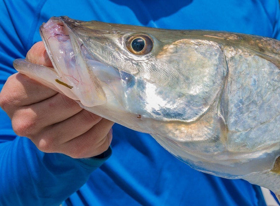 3/4 Day Private Fishing Charter