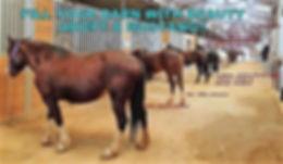 Mustangs at Coni Lehr's Auburn Barn.jpg