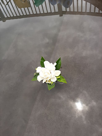 floating gardenia.jpg