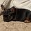Thumbnail: French bulldog