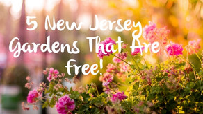 5 New Jersey Gardens That Are Free!