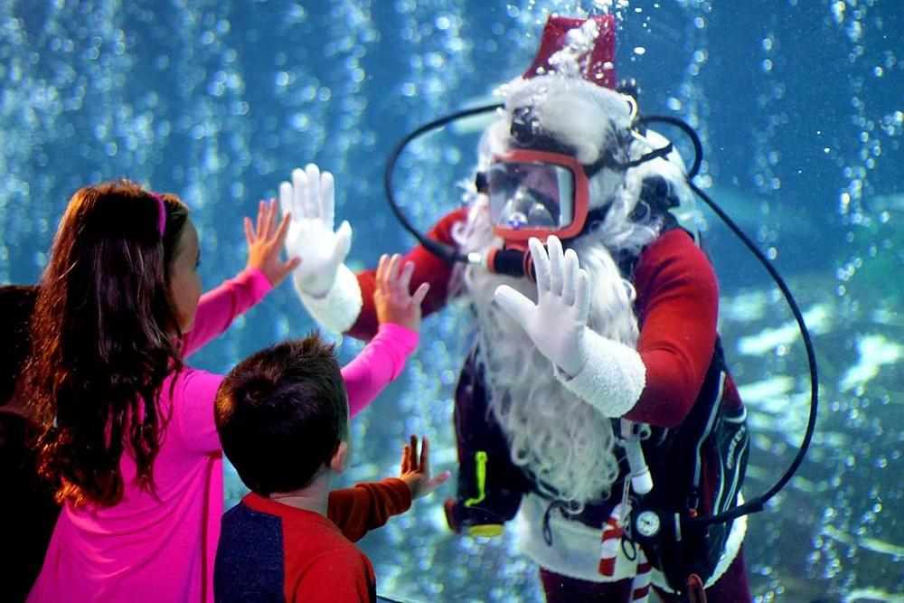 Christmas Underwater - Adventure Aquarium