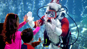 Have you been to Christmas Underwater?