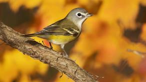 New Jersey's Birding Hot Spots