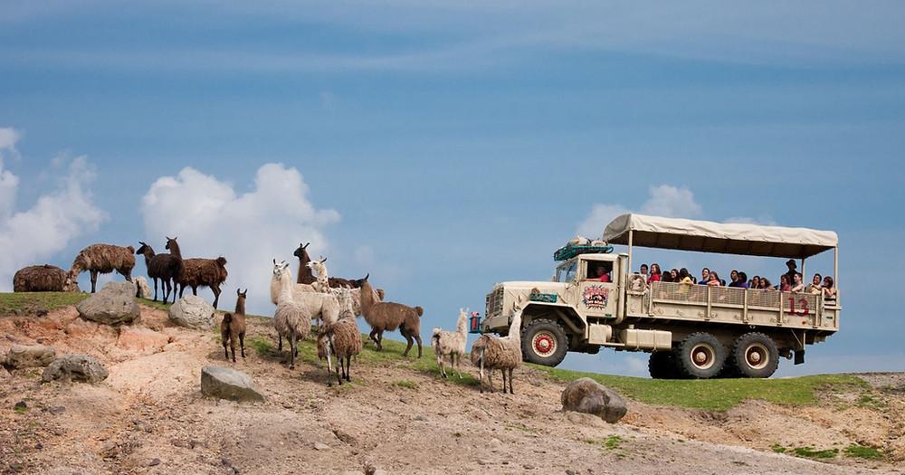 Six Flags Great Adventure Safari