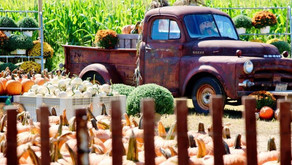 Pumpkin Picking Season Is Here! Get Your Gourds From These Jersey Farms!