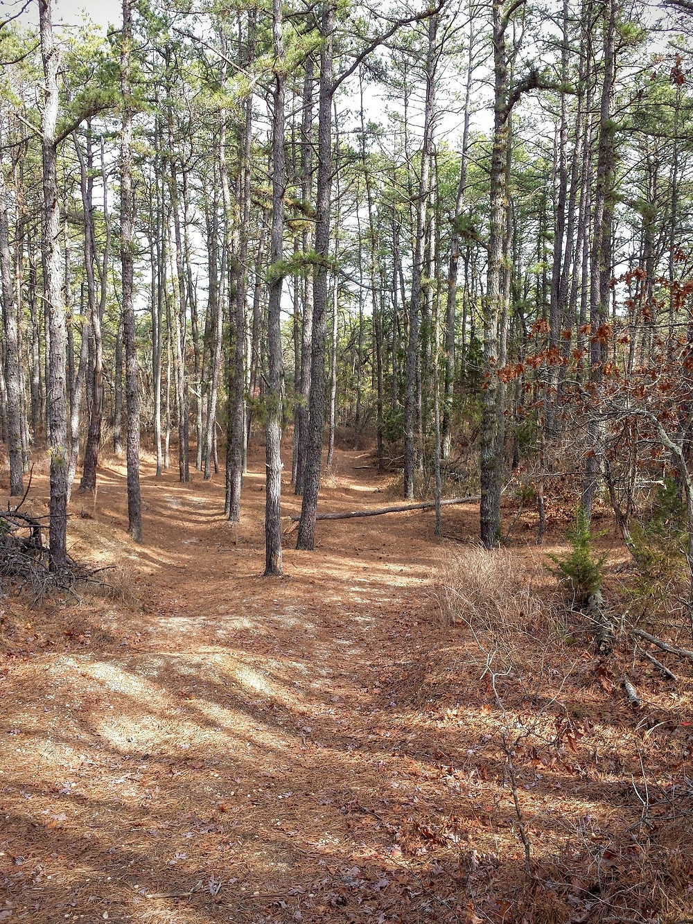 South Jersey Hikes