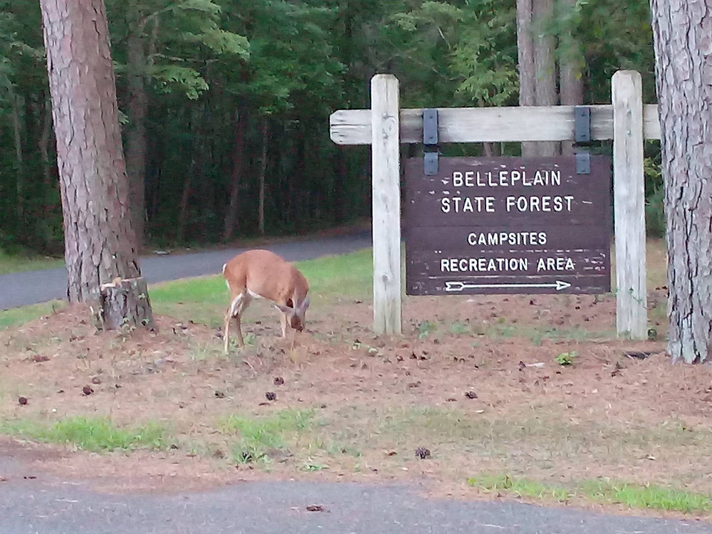 Belleplain State Forest Visiting Information