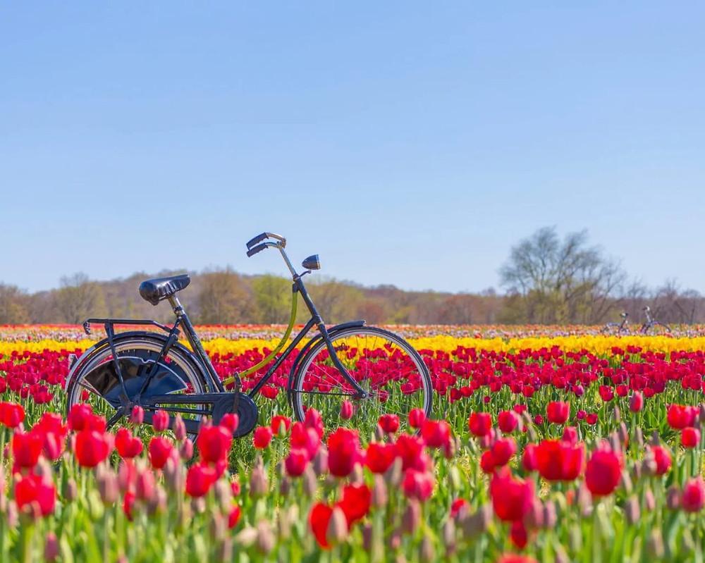 New Jersey Tulip Festival