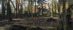 Replanting woods at Stradey banner