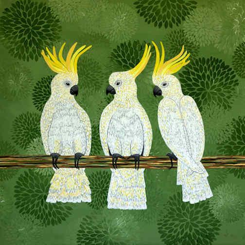 Aussie Cockatoos