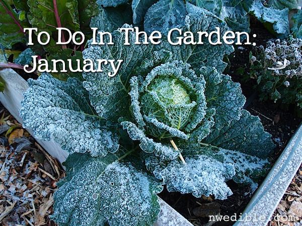 Gardening in January