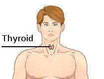 Thyroid_dummy.jpg