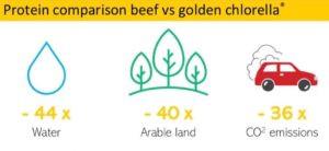 Alver, Golden Chlorella sustainability, vegan, animal free, protein, rich, healthy, algae, fitness, Oslo, Norway