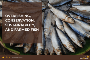 Overfishing, Conservation, Sustainability, and Farmed Fish
