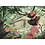 Thumbnail: Poster double face Un baobab pour Lady Lily