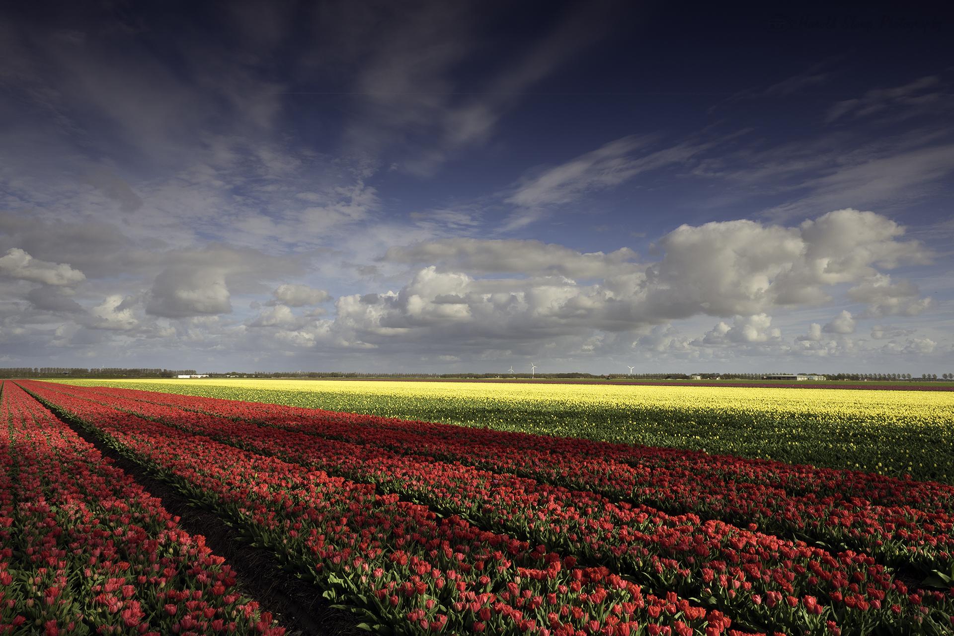 Tulpenveld Creil