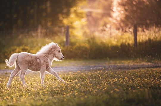 Eino the foal.jpg