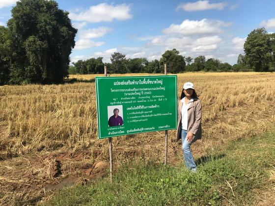 Thailand Organic & GAP Rice Harvest 2017/18