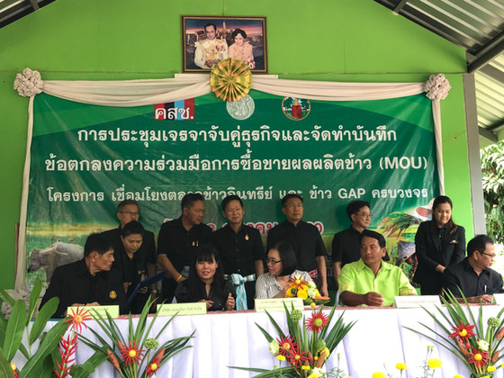 Thailand Sustainable Project:                       GAP and Organic Rice