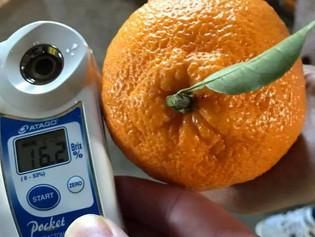 我が家の28年度産柑橘の出荷!