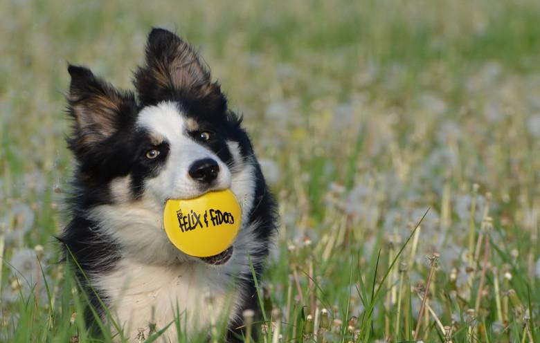 grass-lawn-meadow-puppy-dog-summer-89907