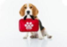 adorable-animal-beagle-1345191.jpg