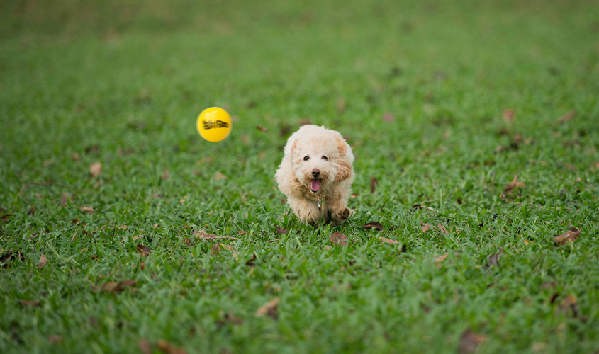 35966-puppy-chasing-a-tennis-ball-1280x8