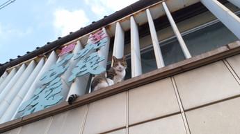 招き猫がやってきた!
