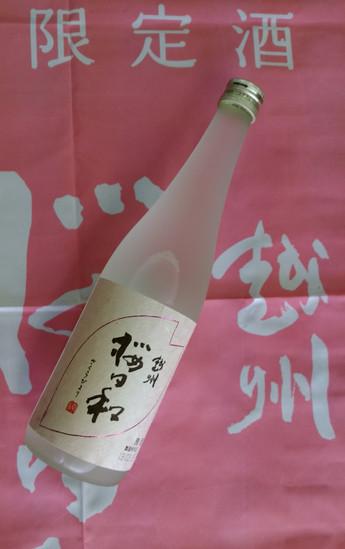 越州 桜日和 入荷です!